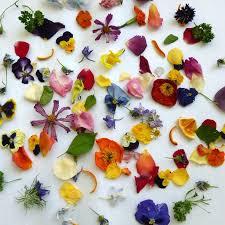 Real Flower Petal Confetti - dried petal confetti dry flowers petal confetti wedding