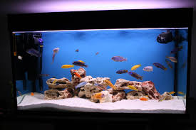 Home Aquarium Decorations Fish Tank Une Table Basse Aquarium Aquatic Aquariums Pinterest