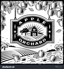 apple orchard black white editable vector stock vector 114211900