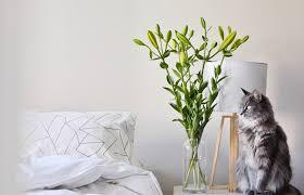 makeover 9 feng shui tips for better sleep
