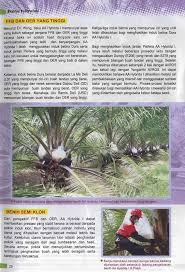 Minyak Kelapa Sawit Terkini baka kelapa sawit terkini untuk meraih hasil yang tinggi 皓 applied