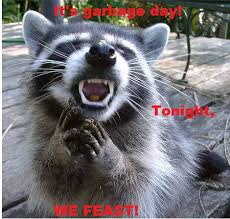 Racoon Meme - angry raccoon know your meme