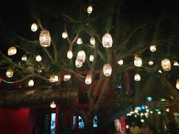lights in the trees picture of los tres gallos cabo san lucas