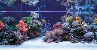 Most Beautiful Aquascapes Tips And Tricks On Creating Amazing Aquascapes Reef2reef