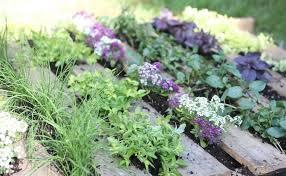 les herbes aromatiques en cuisine plantes aromatiques cuisine et herbes faciles à cultiver inspirez vous