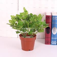 online buy wholesale monstera leaves from china monstera leaves