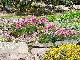 Rock Garden Mn Rockery Gardens Rockeries Are Ideal For Well Drained Slopes