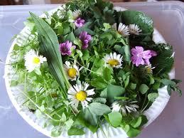 cuisiner les herbes sauvages cuisinez les plantes sauvages à la garde freinet le coin bleu