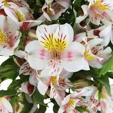 at that alstroemeria flower