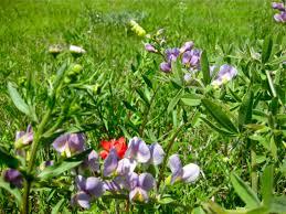 oklahoma native plants oklahoma eco landscaping