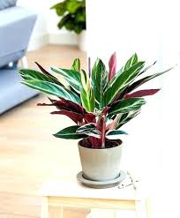 small low light plants best indoor plants without light for inside office and watering can