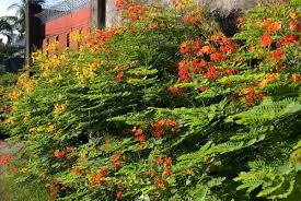 most beautiful flowering trees in your garden page 2