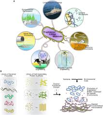 synthetic biology engineering of biofilms as nanomaterials