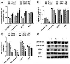 the role of quercetin and vitamin c in nrf2 u2011dependent oxidative