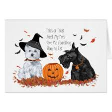 scottish terrier cards greeting photo cards zazzle