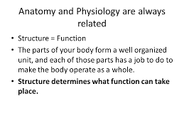 Anatomy And Physiology Place Human Anatomy And Physiology An Introduction Mrs S Mcelwee