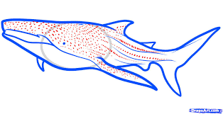 how to draw a whale shark whale shark step by step sea animals