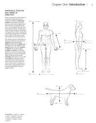 Planes And Anatomical Directions Worksheet Answers Anatomia Dibujos