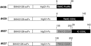 tumor specific t cell activation by recombinant immunoreceptors