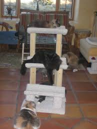 mews u0026 views with the tlc cats cat trees still rule