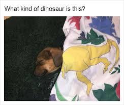 Funny Dinosaur Meme - 15 funny memes by tank sinatra junk host