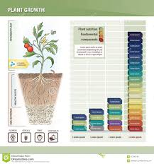 Plant Chart Of Medicinal Herbs 1 Stock Illustration Image 63360212