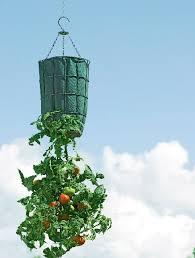 best 25 upside down tomato planter ideas on pinterest tomato