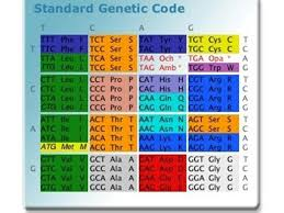 9 most important properties of genetic code biology