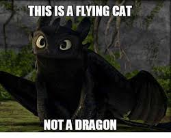 Flying Cat Meme - this is a flying cat not a dragon cats meme on me me