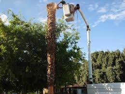 central valley trees landscape services tree work