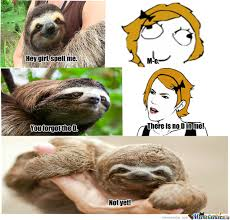 She Wants The D Meme - sloth wants the d memes wants best of the funny meme