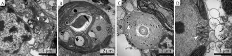 improved ultrastructure of marine invertebrates using non toxic