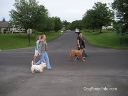 How Do Blind Dogs Know Where To Go The Walk The Proper Way To Walk Your Dog Dog Walking