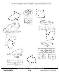 life cycle of a butterfly cut and paste insects pinterest