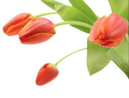 www flowers flowers flowers online