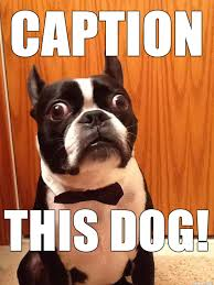 Boston Terrier Meme - shocked boston terrier meme on imgur