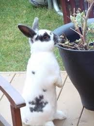 Rabbit Repellent For Gardens by Best 25 Rabbit Repellent Ideas On Pinterest Gardening Deer