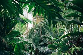 9 trendy houseplants that don u0027t need direct sunlight jungle spaces
