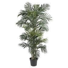 nearly 6 5 golden palm silk tree target