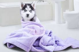 Make Bathtime Fun For Your Dog It U0027s Bath Time Towels Brushes Dog Shampoo And More American