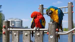 birds images pexels free stock photos