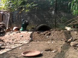 cerco animali da cortile animali da cortile a nettuno kijiji annunci di ebay