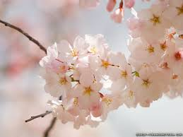 spring bloom wallpapers crazy frankenstein