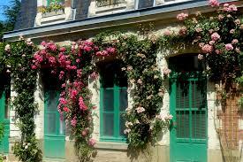 Achat Rosier Grimpant by Rosier Jardins De Pan U2013 Jardinier Paysagiste à St Brieuc En