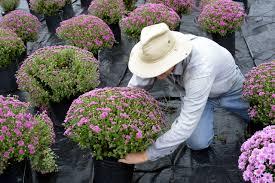 Flowers Paducah Ky - mountain workshops 2016 planting seeds by joan lederer