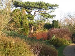 the winter garden the cambridge university botanic garden the