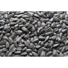 sunflower seeds wholesale price u0026 mandi rate for sunflower beej