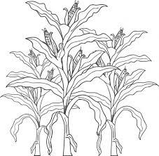 free printable corn stalks fall coloring kids corn