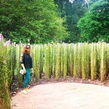 Botanical Gardens Ticket Prices Botanic Gardens Singapore S Unesco Site Visit Singapore Ph