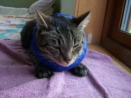 Buster Comfort Collar Dealing With The Dreaded E Collar E Cone